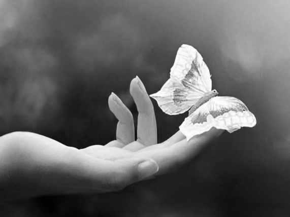 butterfly_kiss_hand_photography_insect_800x600_hd-wallpaper-1818348